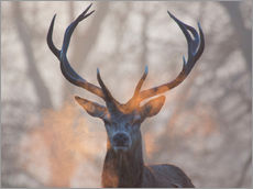 Gallery print  Stag breath at sunrise, Richmond park - Alex Saberi