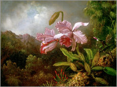Gallery print  Orchids in a Jungle - Martin Johnson Heade