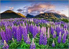 Gallery print  Lupines at Arthur's Pas