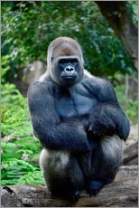 Wall Stickers  sitting silverback - imageBROKER
