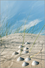 Gallery print  Dune with sea shells - Reiner Würz
