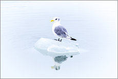 Gallery print  Seegull Piece of Glacier - Thomas Hagenau