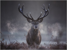 Wall sticker  A majestic red deer stag breathing - Alex Saberi