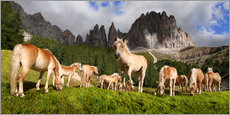 Wall sticker  Haflinger horses in a meadow in front of the Rosengarten Mountains - Michael Rucker