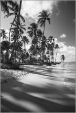 Gallery print  Tropical palm trees on a Brazilian beach in black and white - Alex Saberi