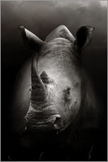 Wall sticker  Rhino portrait - Johan Swanepoel