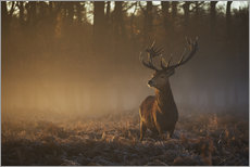 Wall sticker  Stag in Autumn Sunrise - Alex Saberi