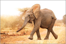 Gallery print  Happy elephant, South Africa - wiw