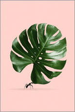 Wall Stickers  MONSTERA ANT - Jonas Loose