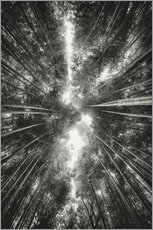 Gallery print  Bamboo forest II - Pascal Deckarm