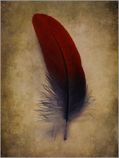 Wall sticker Blue and red feather