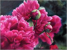 Wall sticker Watercolor pink peonies