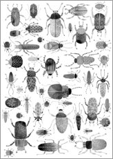 Wall sticker  Beetles, black and white - Nic Squirrell
