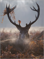 Alex Saberi - Deer Stag in Winter