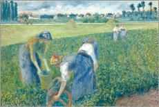 Wall sticker  farmers - Camille Pissarro