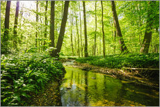 Gallery print  Fresh green forest - Oliver Henze