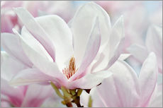 Wall sticker Magnolia macro
