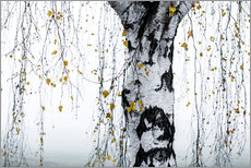 Wall sticker  Birch Tree 1 - Mareike Böhmer