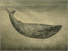 Gallery print  The wallpaper whale - Terry Fan