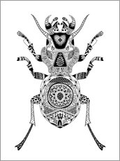 Colouring posters  Noble beetle