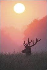Wall sticker  A male deer Stag at sunset - Alex Saberi