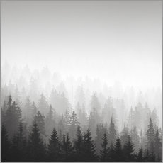 Gallery print  Forest in fog - Philipp Dase