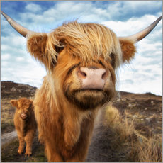 Wall sticker  Highland cattle with calf - Westend61