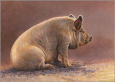 Wall sticker  Pig in the wallow