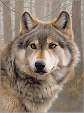 Gallery print  North American Wolf - Ikon Images