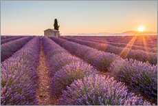 Gallery print  Sunrise over lavender field - age fotostock