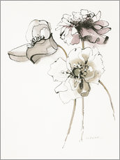 Wall sticker Three Somniferums Poppies