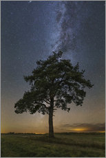 Wall sticker Lonely tree under the Milky Way