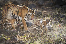 Gallery Print  Tiger family - Janette Hill