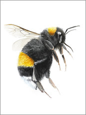 Wall sticker  Pretty bumblebee - Nadine Conrad