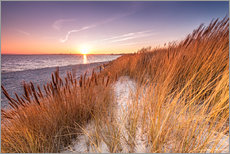 Gallery print  Sunset in the reed - Nordbilder