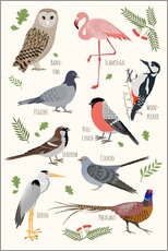 Gallery Print  Bird Species - English - Kidz Collection