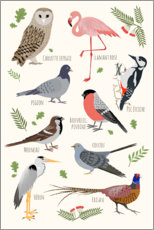 Premium poster Bird species - French