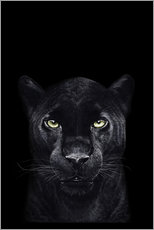 Gallery print  Black panther on a black background - Valeriya Korenkova