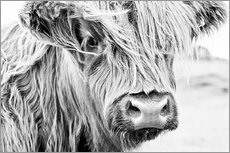 Gallery print  Highland cattle - Art Couture