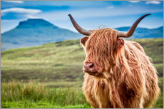 Art Couture - Highland cattle in Scotland