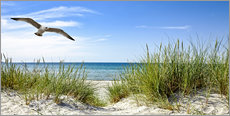Wall sticker  Seagull flight over sand dunes, Baltic Sea - Art Couture
