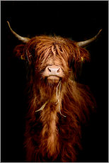 Wood print  Scottish highland cattle - Art Couture
