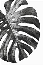 Gallery Print  Black monstera 01 - Art Couture
