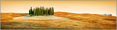 Alu-Dibond  Cypress trees in Tuscany - Art Couture