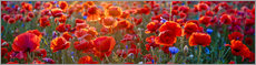 Canvas print  Poppy field - Art Couture