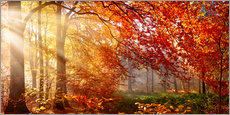 Premium poster  Forest in Autumn - Art Couture