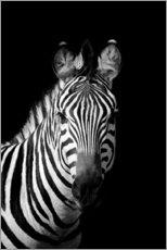 Canvas print  Portrait of a zebra