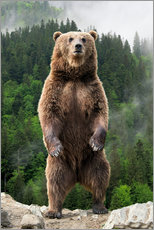 Canvas print  Big brown bear standing on his hind legs