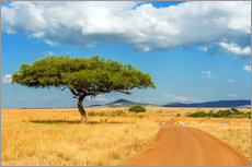 Acrylic print  A lonely tree in Africa