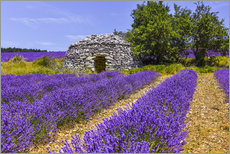 Premium poster Stone hut in the lavender field